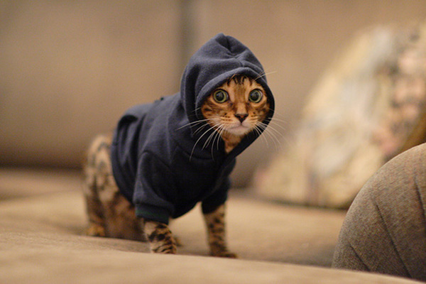 pet-hoodies-for-sale