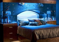 Aquarium Bed Set